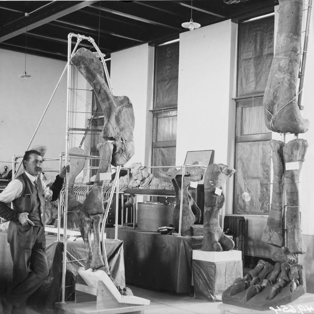 virmuze exhibit S.H. Knight's Fossils of Wyoming logo main
