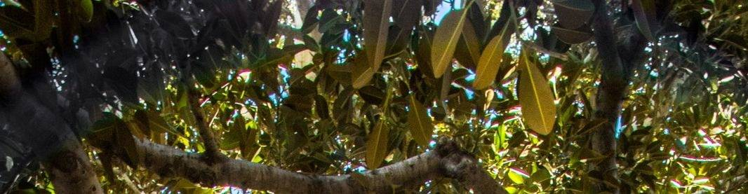 virmuze exhibit Problem Trees logo main banner