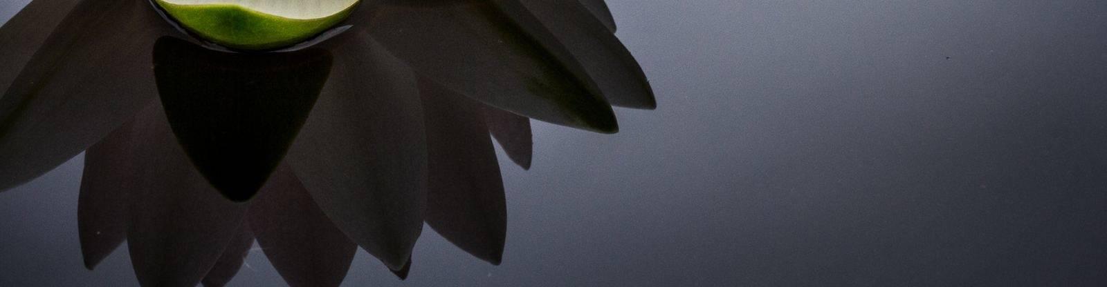 virmuze exhibit Lotus Blossom logo main banner