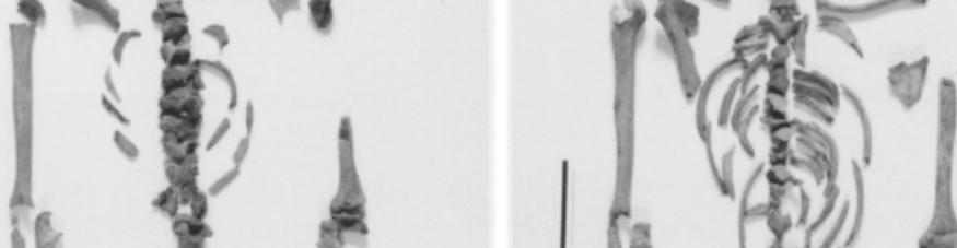 virmuze exhibit Distinguishing between multiple skeletons logo main banner
