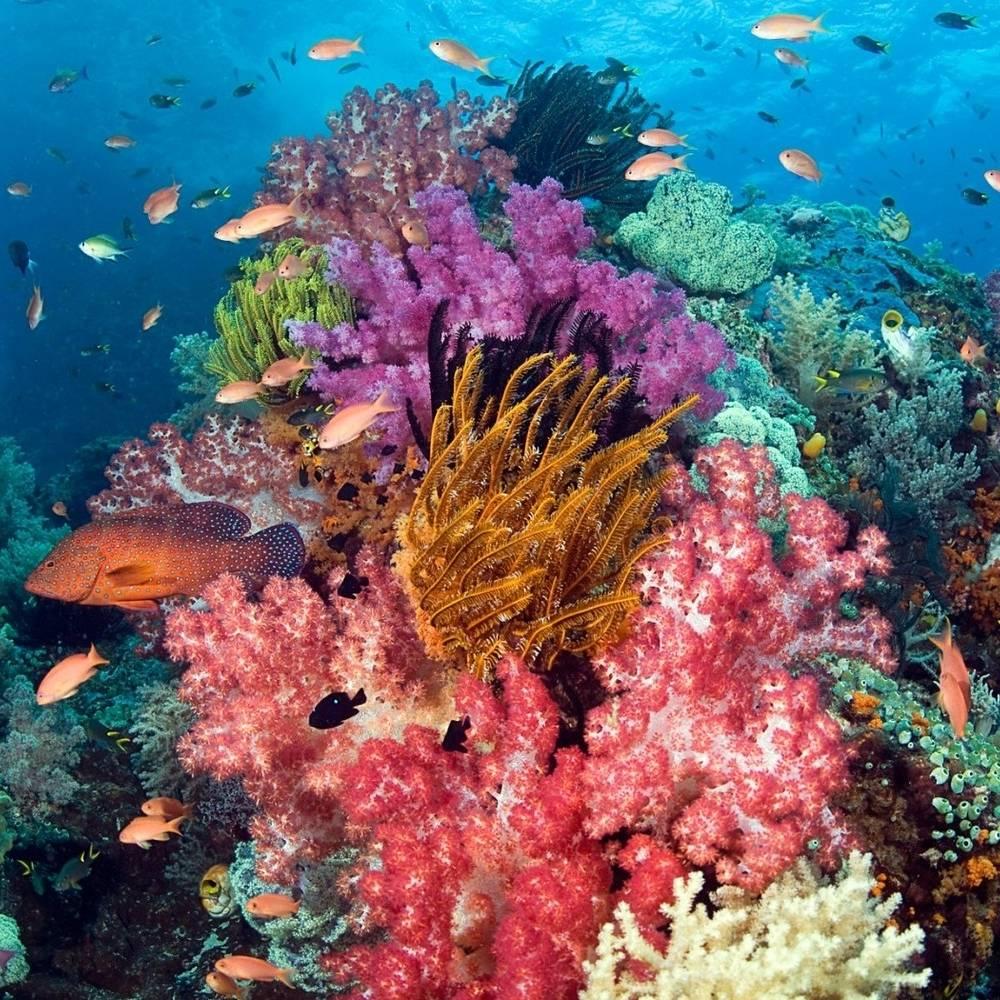 virmuze museum Underwater World main logo