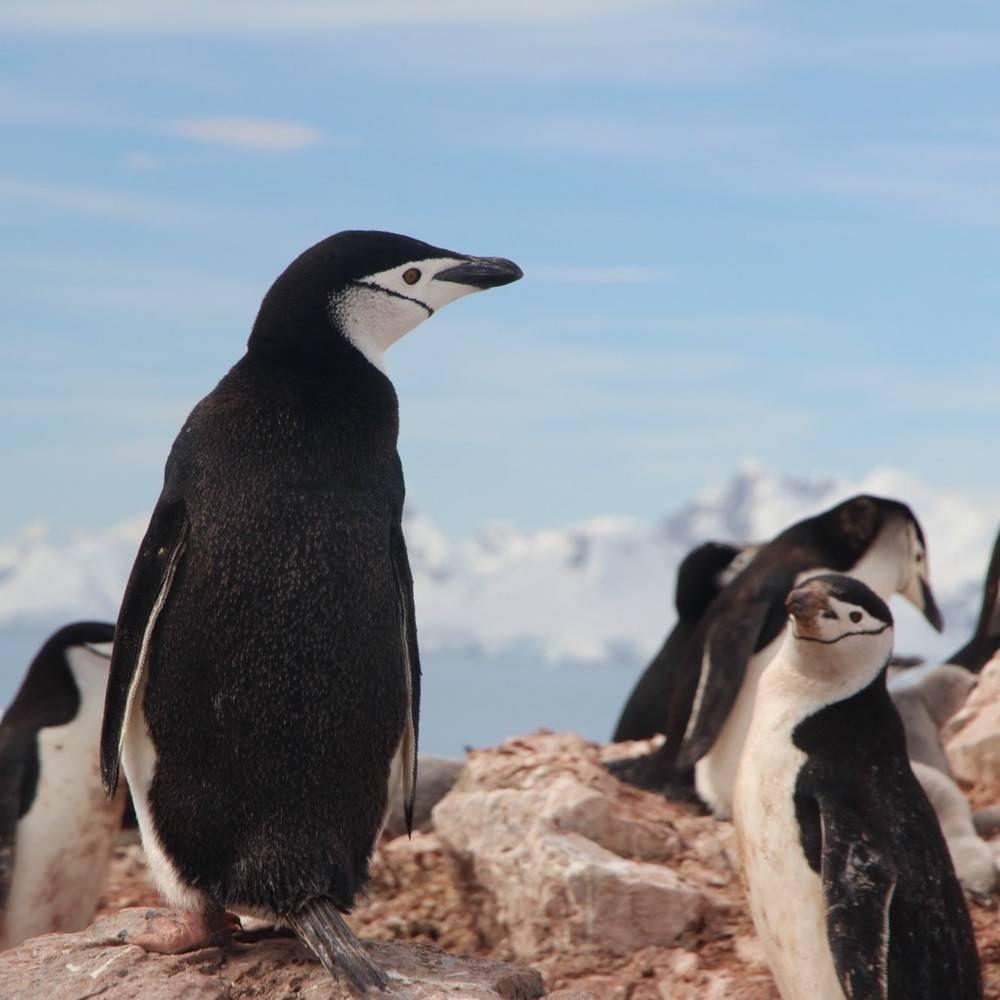 virmuze museum Antarctic Photography main logo